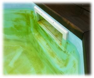 Groene vlekken